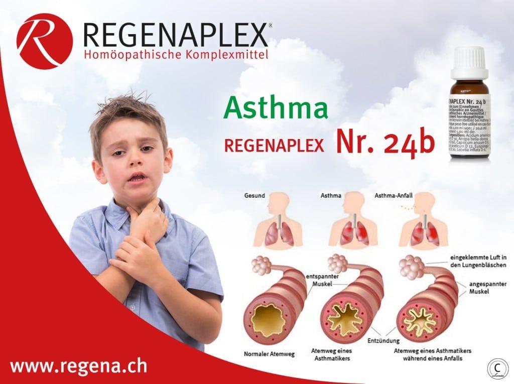 REGENAPLEX Nr 24b Asthma